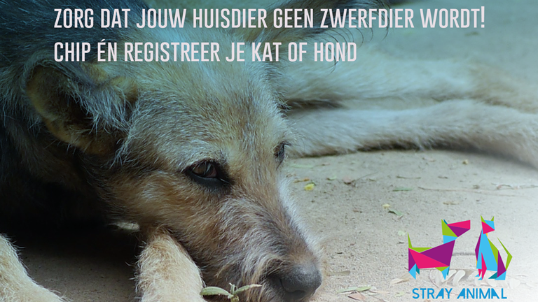 Wereldzwerfdierendag 4 april 2019